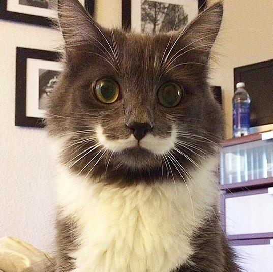 hamilton_the_hipster_cat